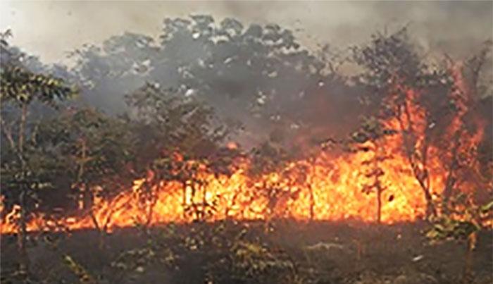 Ranch de Dolly: 4310 Hectares ravagés par un incendie