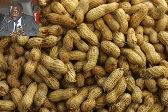 Agriculture: Plus de 900 000 Tonnes d'arachides produites en 2016/2017 (Ministre)