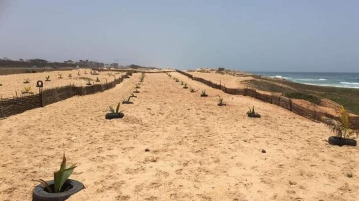 Plantation de 1.000 arbres sur la corniche de Guédiawaye
