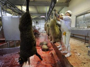 France : haro sur le halal