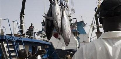 10 000 tonnes de thon et 1 750 tonnes de merlu noir par an : Les termes scandaleux de l'accord de pêche Sénégal-Ue