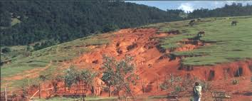 La région de Fatick plus touchée par la dégradation des terres (expert)