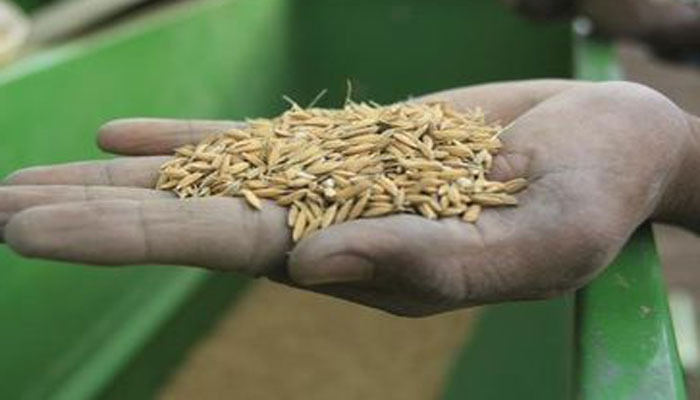 Agriculture-Perspectives: 15 nouvelles variétés de semences de riz annoncées par l'ISRA ''d'ici décembre''