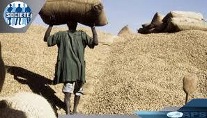 Commerce: Plus de 26 000 tonnes d'arachides exportées par les opérateurs sénégalais(Officiel)