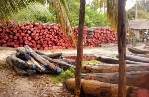 Trafic de bois au Sénégal: deux Français cités dans une affaire