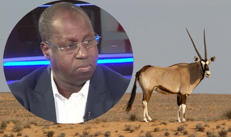 """Abdou Karim Sall sur les gazelles mortes : """"Cela ne m'ébranle pas…"""""""