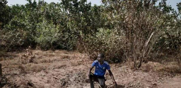 Le conflit casamançais, un fardeau politique et sécuritaire pour l'État sénégalais