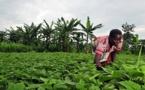 Agriculture: La production agricole de 2015 est estimée à  cinq millions de tonnes( Rapport)