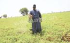 """Macky Sall : """"L'agriculture va être le secteur qui va tirer la croissance dans le PSE''"""