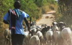 Lutte contre le vol de bétail : le préfet de Fatick annonce une série de mesures