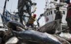 Hausse de 15,3% des débarquements de la pêche à fin septembre 2016