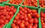 Tomate industrielle: Une production de 80000 tonnes attendue dans la vallée(LE SOLEIL)