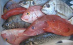 Exclusif Seneplus: Des professionnels de la pêche se prononcent sur les maux de leur secteur(vidéo)