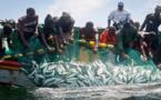 Mbour: Un mort et six pêcheurs portés disparus dans le chavirement d'une pirogue