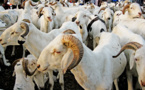 Tabaski 2017 : 202 334 têtes de moutons déjà disponibles sur le marché, selon Aminata Mbengue Ndiaye(vidéo)