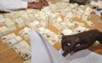 SENEGAL: Démarrage ce 1er mars de la révision des listes électorales