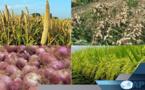 AGRICULTURE: 50 milliards pour le financement de la prochaine campagne agricole