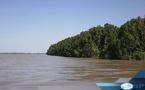 Orpaillage par dragage: Le fleuve Gambie fortement agressé