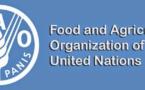 Importations alimentaires: La facture mondiale a dépassé mille milliards de dollars en 2017 (FAO)