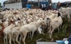 Approvisionnement en mouton pour la Tabaski: Les services de l'élevage de Fatick donnent des assurances