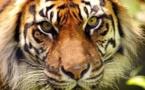 Vidéo: Les 10 animaux qui risquent de complètement disparaître de la planète dans les 10 prochaines années. Regardez