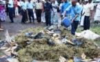 INSOLITE: Téméraire voleur de Drogue aux Mamelles