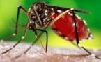 Info pratique:  La dengue, c'est quoi?