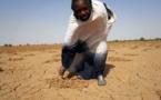 Résultat d'une étude sur la dégradation des terres au Sénégal: 13% de la superficie affectés