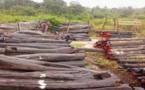 Trafic de bois vers la Gambie: Un gendarme et ASP en prison