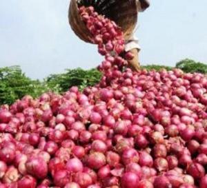 """Agriculture: L'Etat salue la """"performance remarquable"""" de la filière oignon en 2015"""