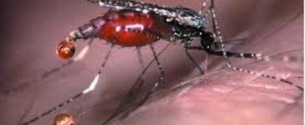 Le paludisme, responsable de la baisse de performances scolaires (médecin)