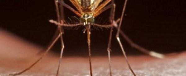 Paludisme: un cas de résistance au traitement découvert en Afrique