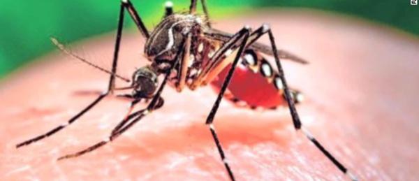Afrique: le virus Zika débarque au Cap-Vert