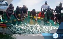 SENEGAL: La pêche artisanale représente 83% des débarquements en EN 2017 (FAO)