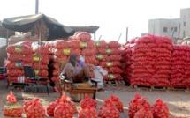 PRODUCTION: 7000 Tonnes d'oignons détruites par les premières pluies du 27 juin passé